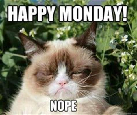Grumpy Cat Monday Meme - grumpy cat on pinterest grumpy cat funny grumpy cats