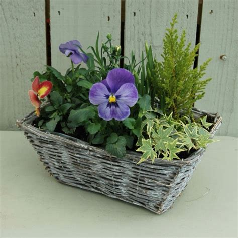 terrasse bepflanzen dekor - Welche Pflanzen Für Balkon