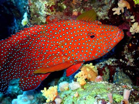 google images fish ocean colorful fish images google search colorful