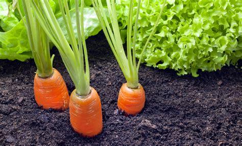 coltivare le in vaso orto autunnale cosa piantare in vaso e in giardino casa