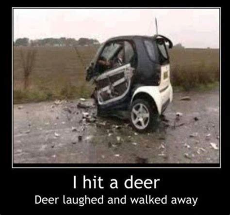 Funny car crash   I hit a deer