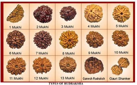 rudraksha meaning rudraksha healthylife werindia