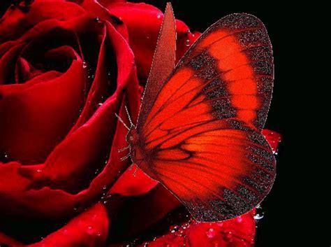 imagenes de rosas y mariposas bellas la mariposa que besaba las rosas cuentos infantiles con