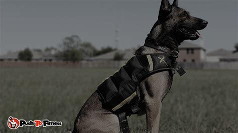 weight vest for dogs updated 7 best weighted vest 2017 with reviews buyer s guide