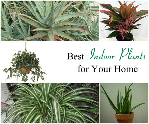 great indoor plants best indoor plants for your home