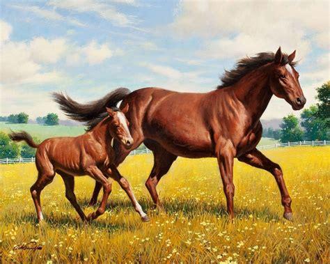 foal horse meadow running grass animals wallpapers hd