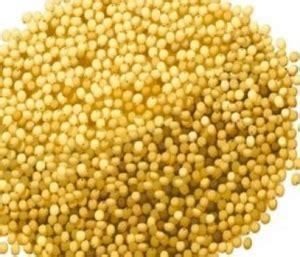 miglio alimento il miglio contiene glutine i celiaci possono mangiarlo