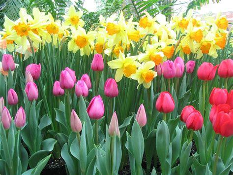 spring flower garden spring flowering bulbs journal garden design montreal