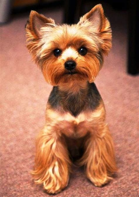 small kid friendly dogs great kid friendly breeds breeds picture