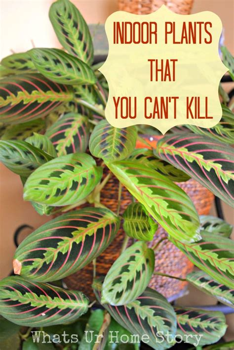 easy plants to grow indoors indoor plants that you just can t kill