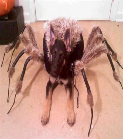 best looking dogs 20 of the best costumes you will see
