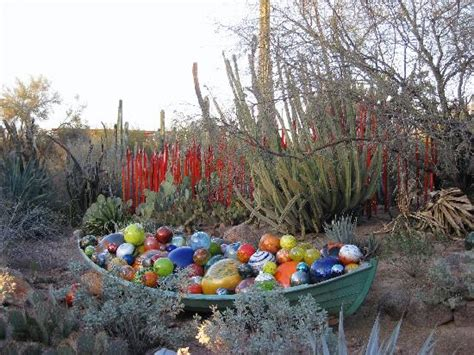 desert botanical garden chihuly chihuly picture of desert botanical garden