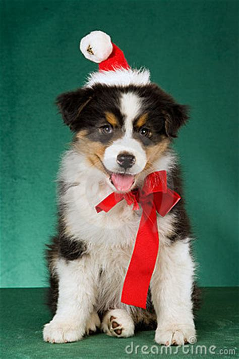 puppies in hats puppies in santa hats