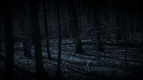 dark forest night image1 jpg spooky forest stock footage video shutterstock