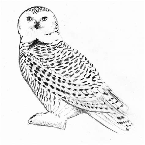 harry potter coloring pages hedwig just an owl by lovelyhufflepuff on deviantart