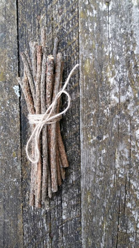 natural pine tree sticks wooden twigs wood branches by