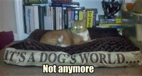when is a not a puppy anymore cat quotes cat sayings cat picture quotes