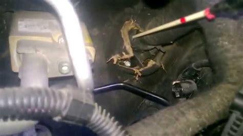 golf mk grommet location  amp power wire