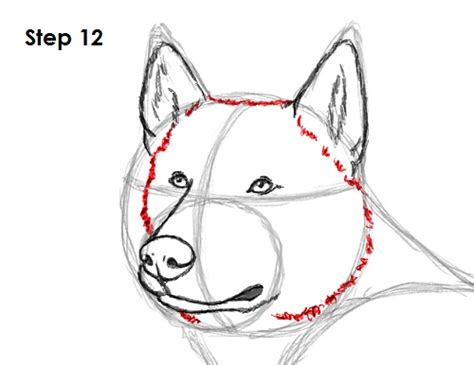 how to a husky image gallery husky drawing steps