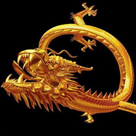 wallpaper gold dragon chinese gold dragon background wallpapers dragon
