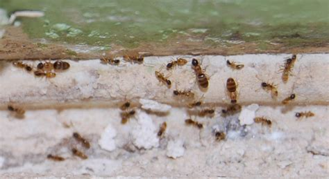 ants in kitchen cabinets florida ants kitchen cabinets florida construction