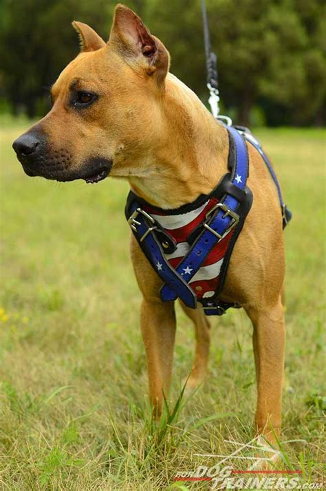 Small Dogs For Home Protection Agitation Protection Leather Harness Pit Bull H1ap