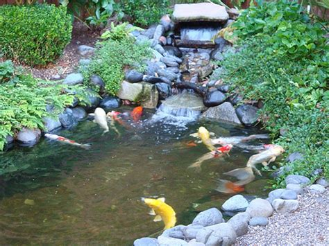 triyae backyard fish pond in the philippines