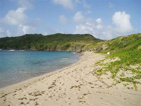colombier beach st barthelemy caribbean address  tours attraction reviews