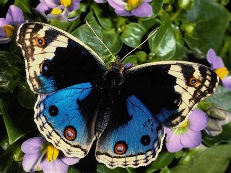 papillon pictures animaux papillons photos et gifs