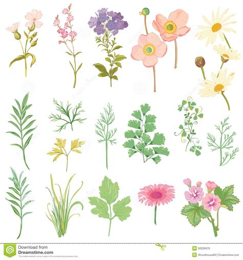 Lily Wall Stickers set of flowers and herbs stock vector image 50205879