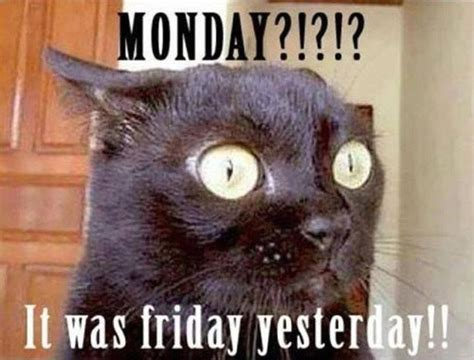 Happy Monday Meme - best 25 monday memes ideas on pinterest funny monday