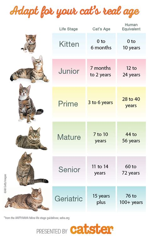 calculate cat years  human years catster