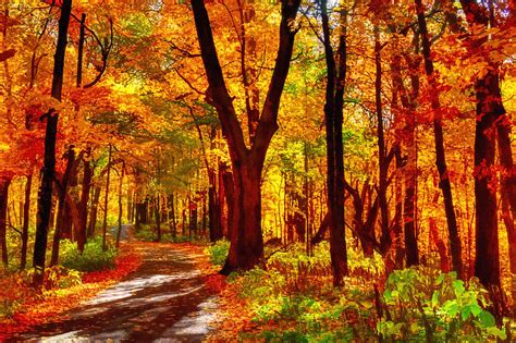 Nature Duvet Cover Autumn Forest Path Photograph By Roger Passman