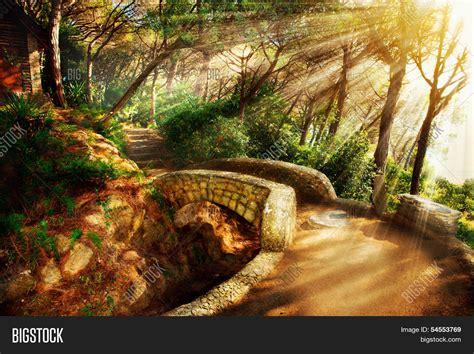 mystical images mystical park trees ancient image photo bigstock