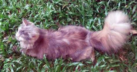 Vitamin Cacing kucing dijual leviana cat