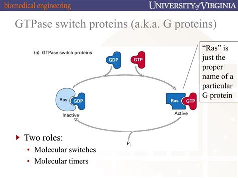 g proteins and second messengers ppt cholera cystic fibrosis and hangovers g proteins