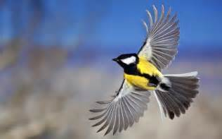 Wallpaper With Birds by Wallpapers Flying Birds Wallpapers