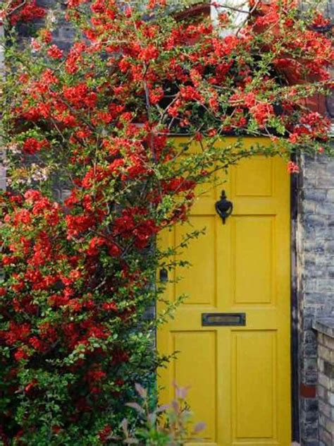 colorful doors 32 bold and beautiful colored front doors amazing diy