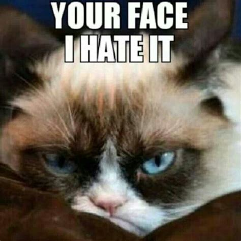 Your Face Meme - your face i hate it grumpy cat tartar sauce pinterest