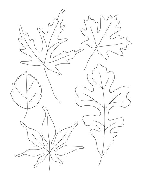 Drawing Leaves by Contour Leaf Drawings Welcome To Ms S Class