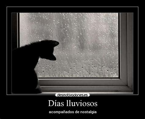 imagenes wasap lluvia gatolluvia 1