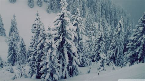 download snowy fir trees 3 wallpaper 1920x1080 wallpoper