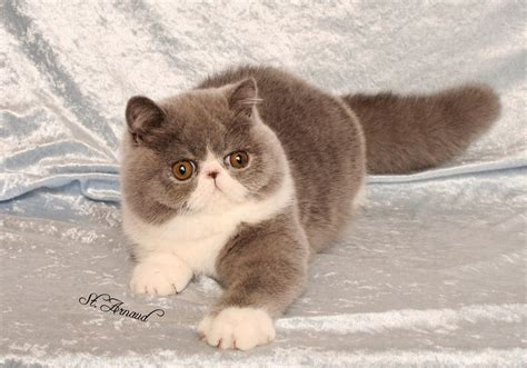 cat price cats kittens for sale price list best