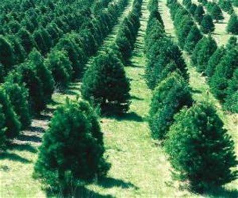 bauers weihnachtsbaum weihnachtsb 228 ume puzzle und ravensburger