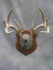Deer antler plaque mount boulder colorado deer antler plaque mount