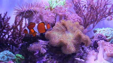 Soft Aquarium 20 gallon soft coral reef aquarium