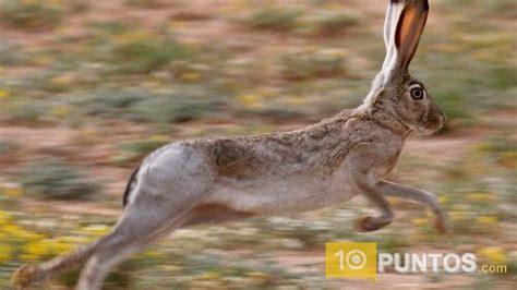 imagenes de animales rapidos los 10 animales terrestres m 225 s r 225 pidos del mundo