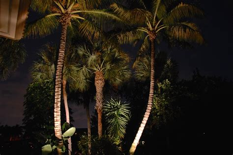 Outdoor Palm Tree Lights Outdoor Lighting Perspectives