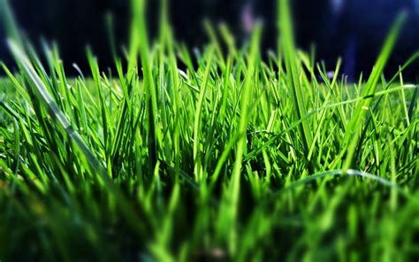 green grass wallpaper green grass wallpaper 25745