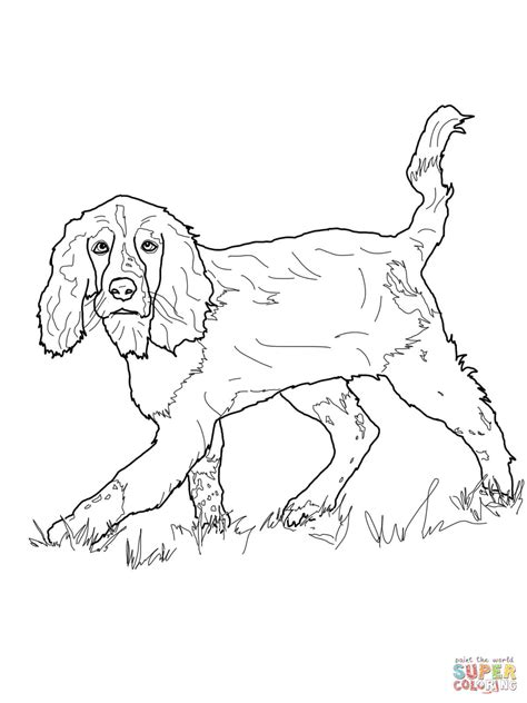 cocker spaniel coloring book coloring pages